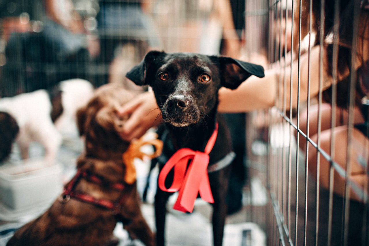 Ist ein Zwingerkäfig für einen Hund zu Hause eine gute Option?