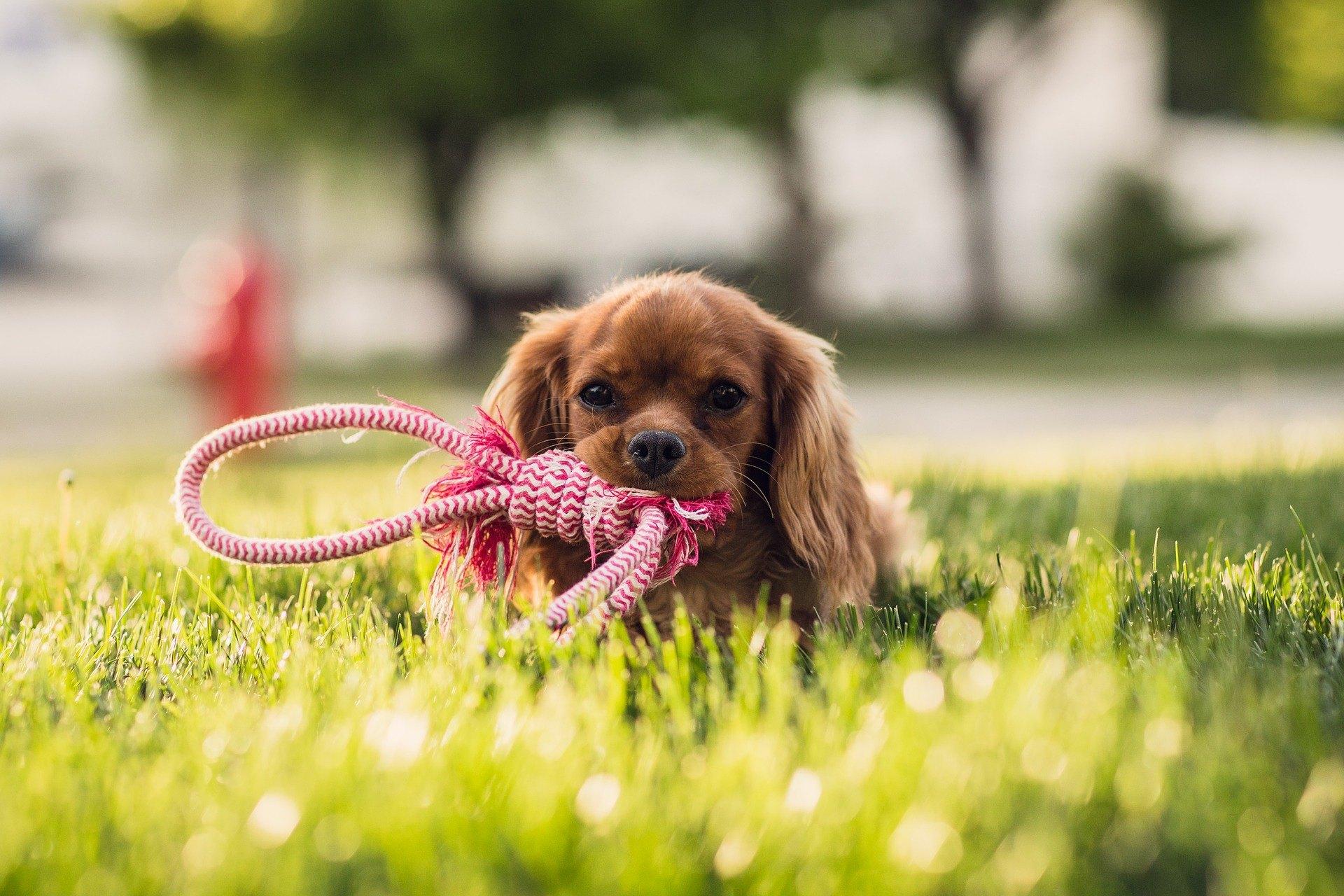 Die Pflege eines Welpen ist eine große Verantwortung. Es bestimmt die körperliche und geistige Entwicklung eines Haustieres in den nächsten Phasen.