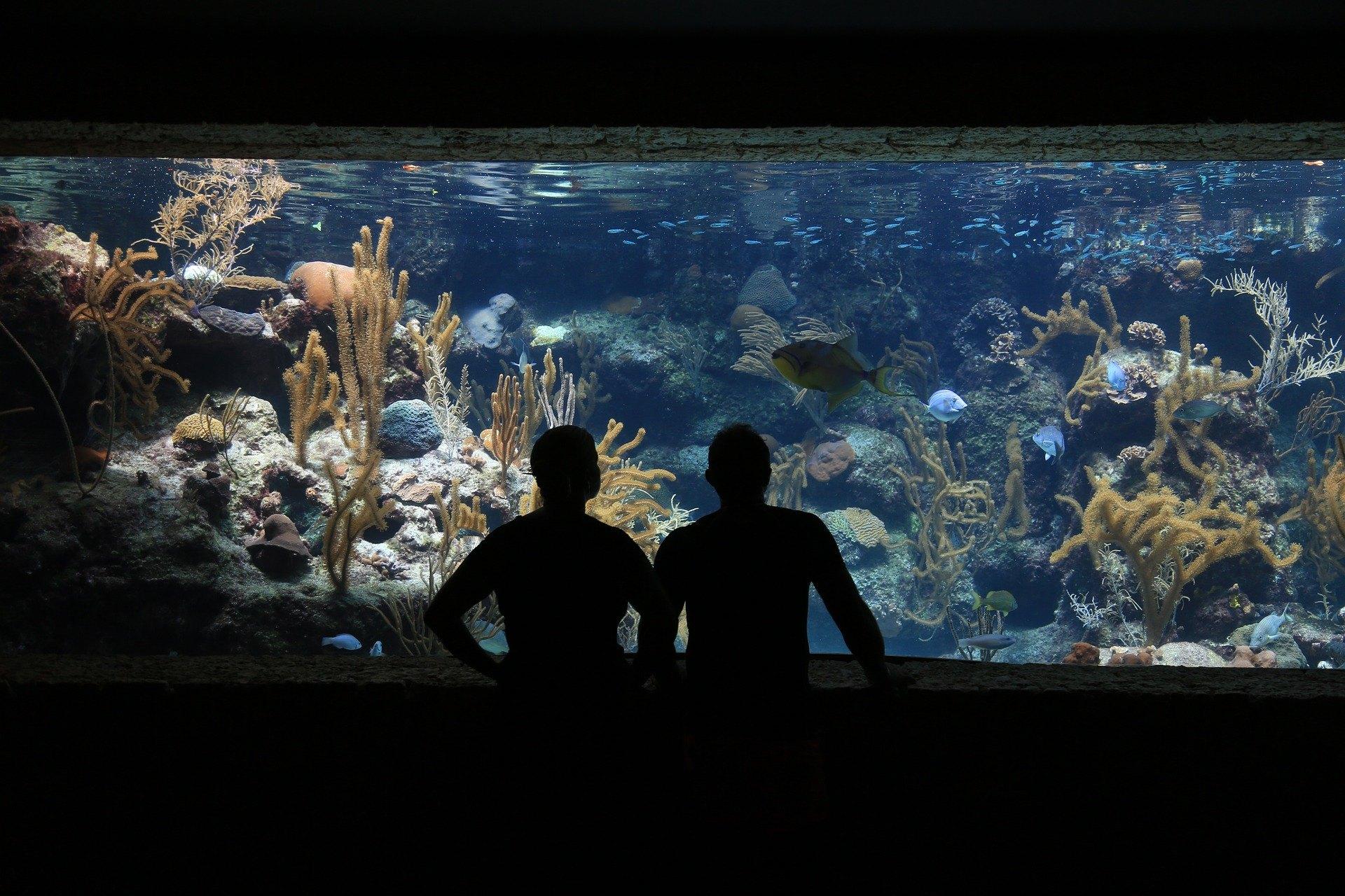 Die Anordnung des Aquariums muss die ästhetischen, technischen und funktionalen Aspekte berücksichtigen. Es kann in einer Vielzahl von Stilen hergestellt werden.