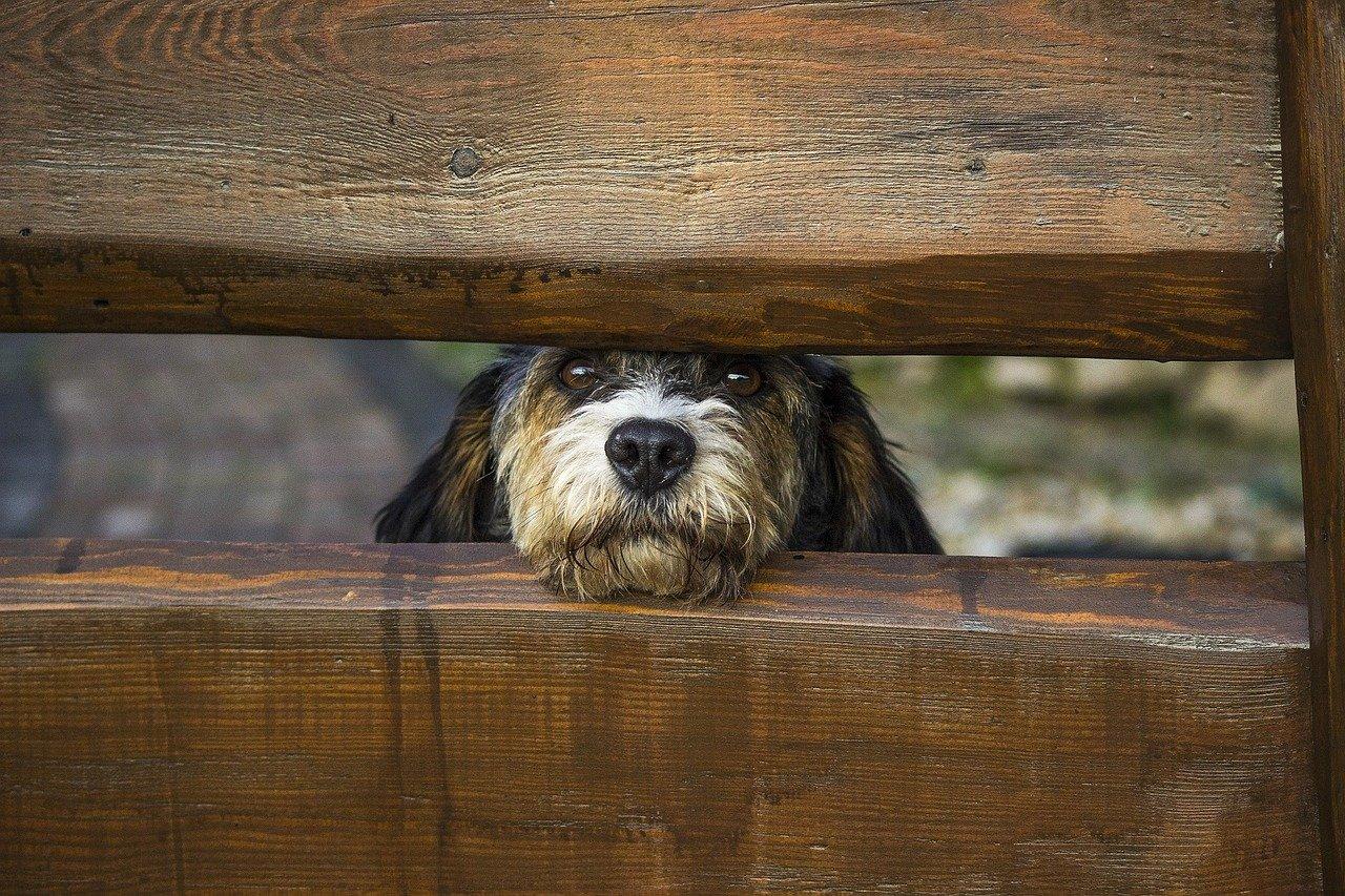 Pseudo-Zwinger ist eine nicht registrierte Zucht von nicht reinrassigen Haustieren ohne Stammbaum, die hauptsächlich mit Hunden verwandt sind.