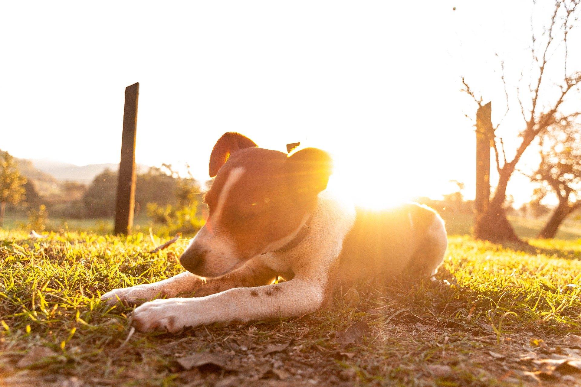 An heißen Tagen müssen Sie Ihrem Hund helfen, sich abzukühlen, insbesondere daran, dass er ständig Zugang zu Trinkwasser hat.