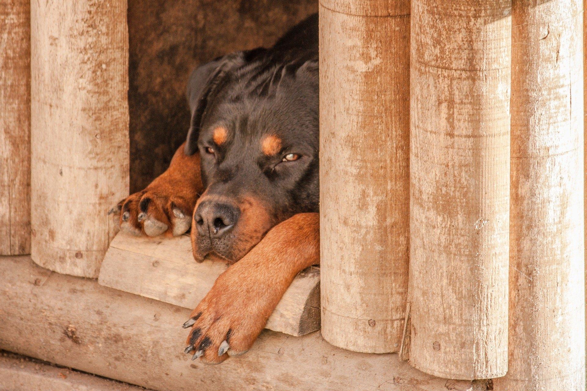 Der Bau eines Hundezwingers sollte die Bedürfnisse seines Bewohners berücksichtigen. Es muss bequem, warm und gemütlich sein.