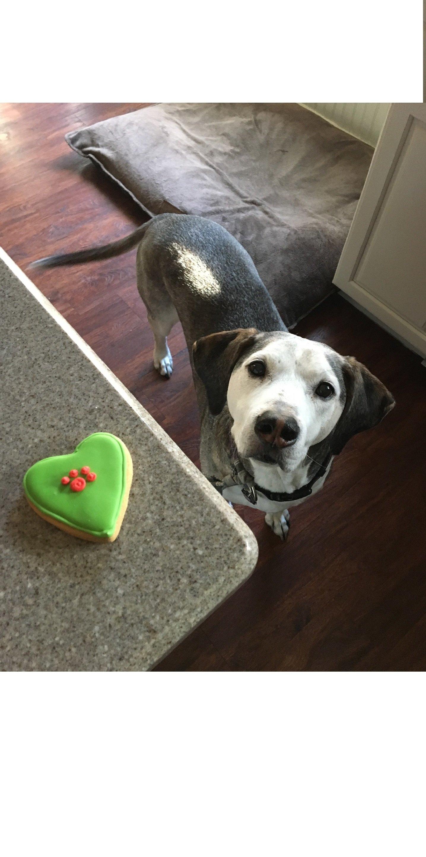 Ein Hundekuchen verleiht dem Geburtstag Ihres Haustieres Glanz. Es ist eine Möglichkeit, Zuneigung zu zeigen und Spaß zu haben.