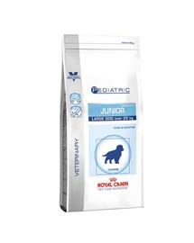 ROYAL CANIN Canine PEDIATRIC JUNIOR LARGE 14 kg