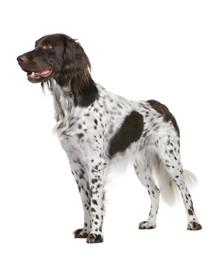 FITMIN Medium puppy 15 kg