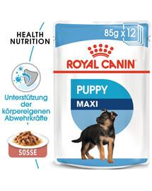 ROYAL CANIN MAXI PUPPY Welpenfutter nass für große Hunde 10 x 140 g