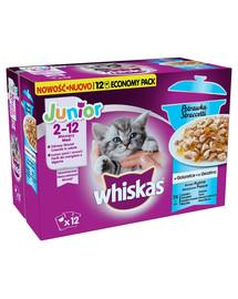 WHISKAS Nassfutter für Katzen in Gelee Junior Casserole Fischgeschmack (mit Lachs, Thunfisch, Seelachs, Weißfisch) 4 x 12 x 85 g